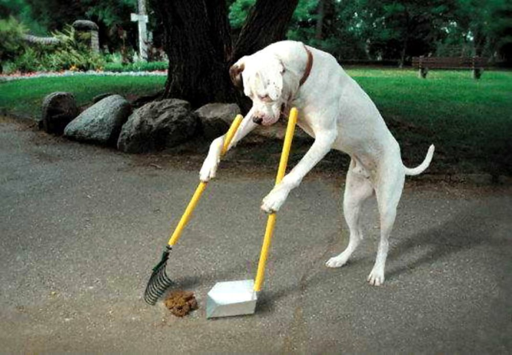 dog-clean-up-poop