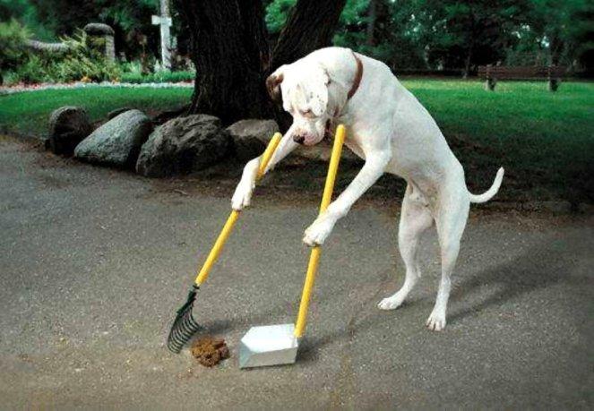 dog-clean-up-poop