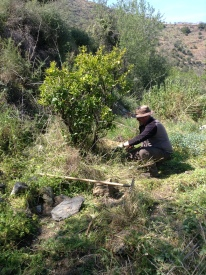 Dave pruning